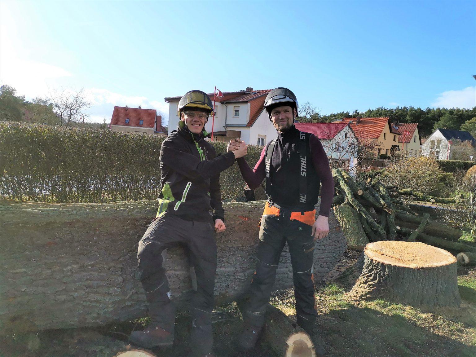 Eichenfällung Beelitz