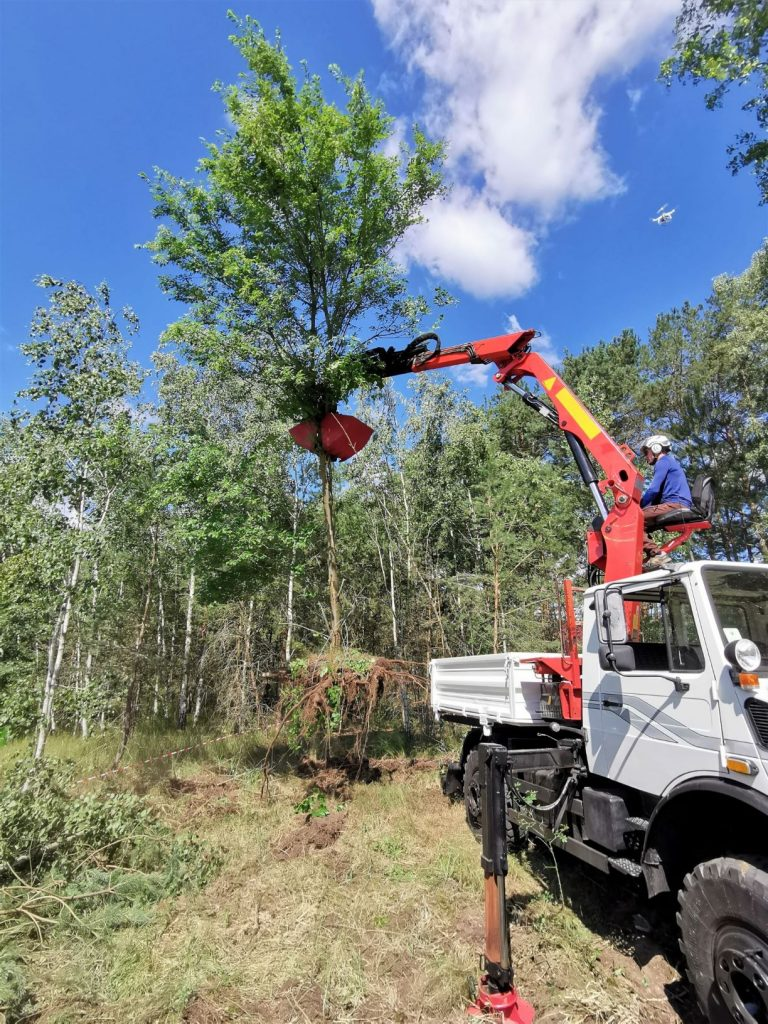 Baufeldräumung Unimog Wurzelentfernung Borkwalde