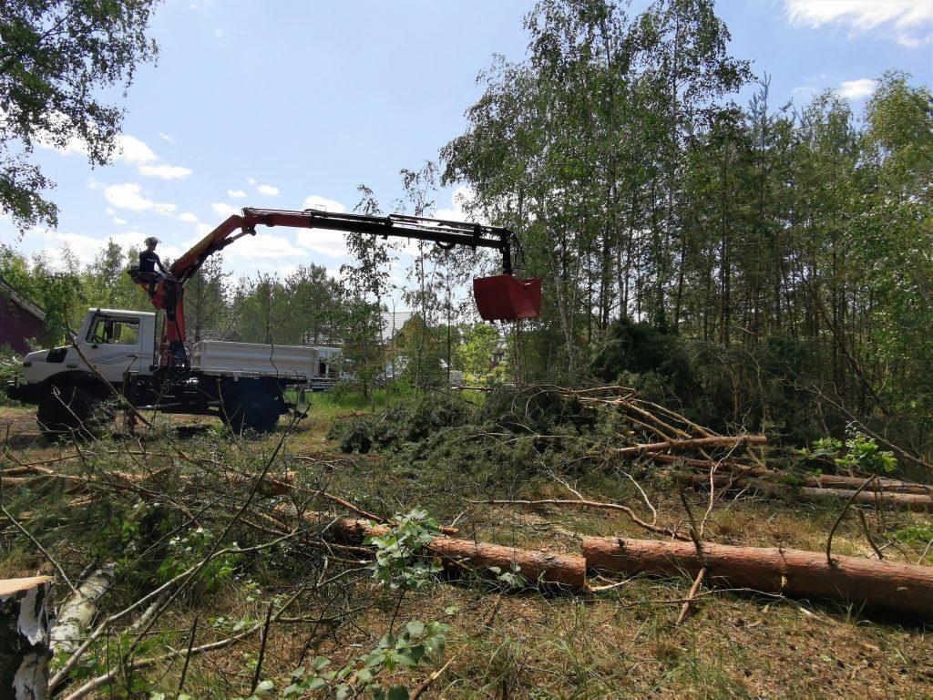 Baufeldberäumung Borkwalde
